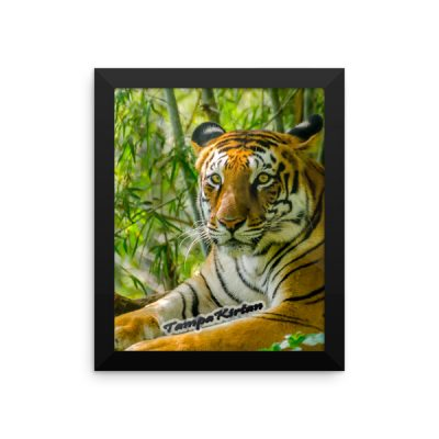 Tiger Framed photo paper poster